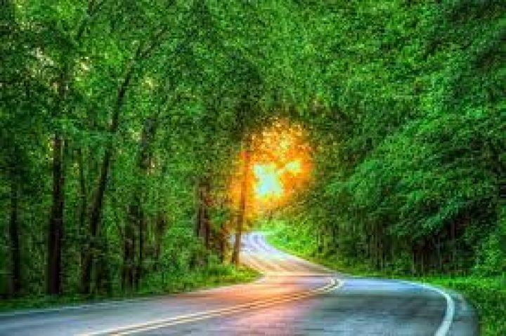 پارک جنگلی گیسوم در ویلا ماسال اجاره ویلا در گیلان و ماسال